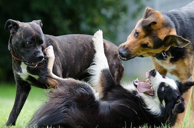 hrající si psi